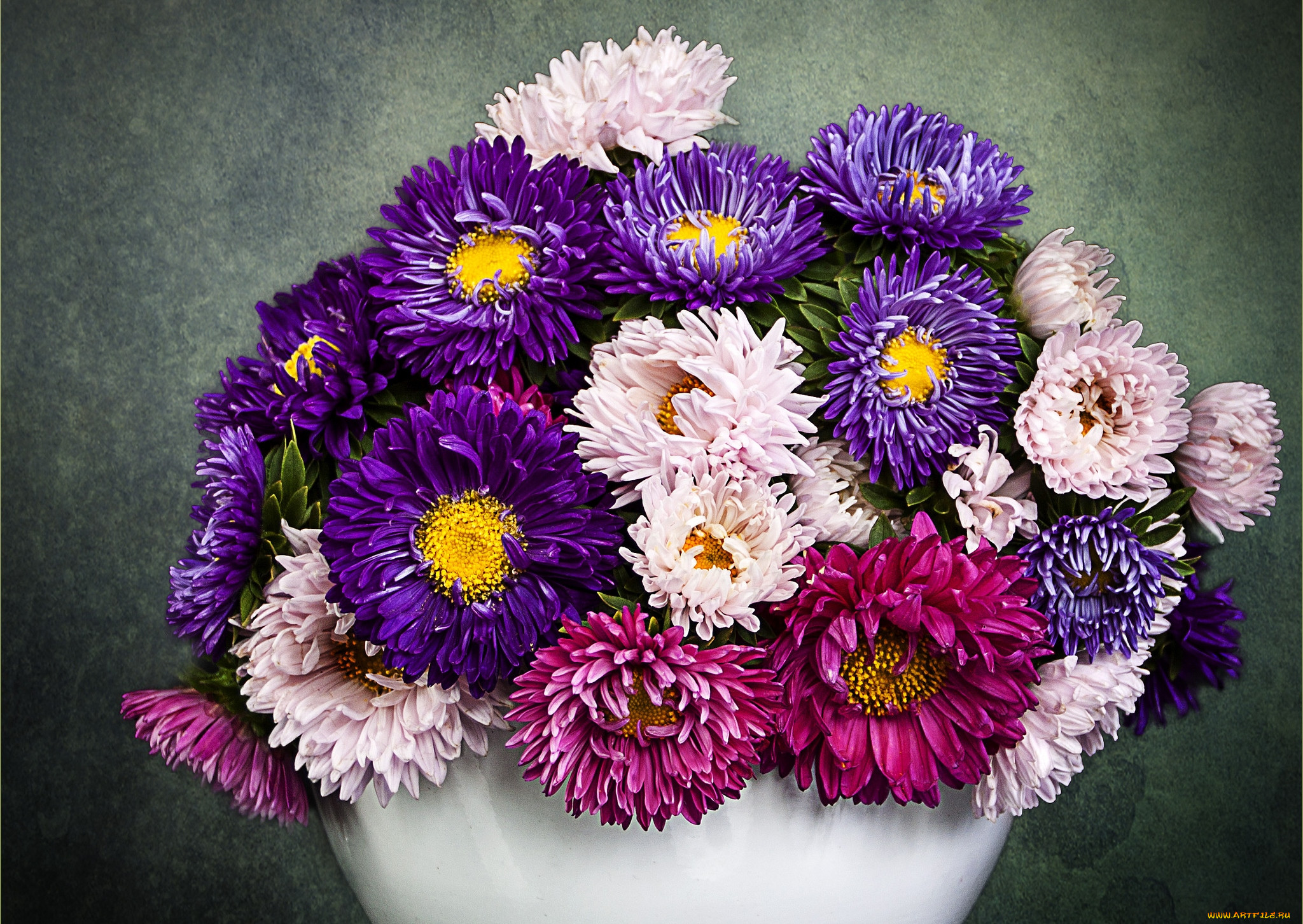 всех картинки цветов астры букеты покупаю камамбер фермеров